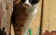 Mačka nemusí byť pre tehuľky vôbec riziková